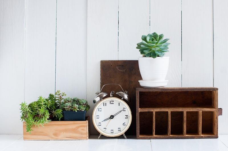 Find Your Plant Soulmate Auckland Home Show